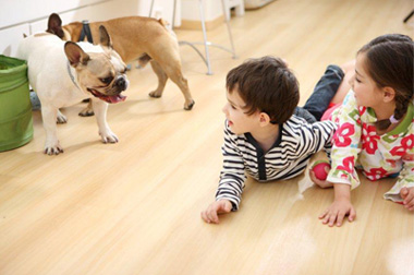 pet friendly and kid friendly laminate flooring