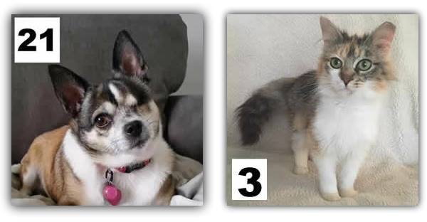 Jabro Pet Contest Winners
